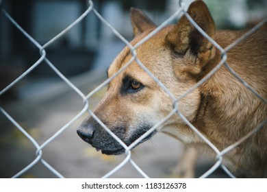 stray dog in cage