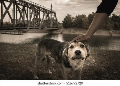 Stray dog at Chernobyl exclusion zone. Love animals. Zone of high radioactivity. Abandoned homeless dog. Ruins of abandoned Pripyat city. Chernobyl. Ukraine.