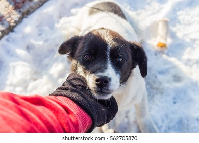 Stray dog enjoys a human hand tap on a winter cold day