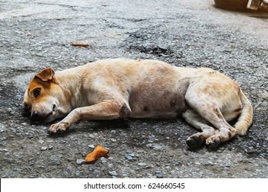 A Stray dog lie down on the floor in the Thai Temple, urban place, Thailand