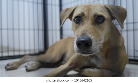 A stray dog is looking at something while he was quarantining inside a large cage for observe general healthy. The quarantine is necessary method to do before transportation dogs to another place.