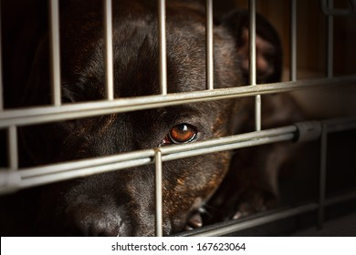 Stray dog looks through the bars of his cage at the animal rescue shelter