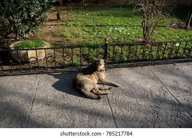 Stray dog lying on street