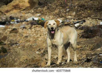 the stray dog ??puppy in the middle of the junk
