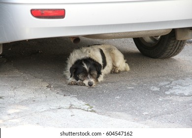 a stray dog in need of assistance is saved from the sun under the bumper car