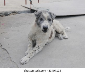 Stray Dog on a Bangkok Street