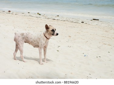 stray dog on a beach in bohol, Philippines