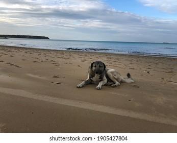 stray dog on the beach. hungry animals. stray dogs. animal protection day. Hayvanları Koruma günü.  - Shutterstock ID 1905427804