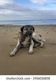 stray dog on the beach. Hungry animals. stray dogs. Animal protection day. Sahilde sahipsiz ac, yorgun ve sahipsiz sokak kopegi. Hayvanları koruma günü. - Shutterstock ID 1906036858