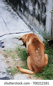 stray dog on roadside.