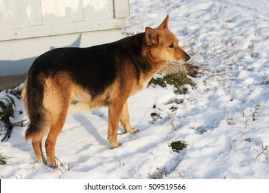 a stray dog on the street in winter
