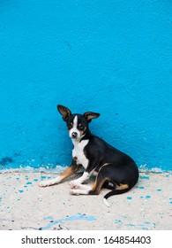 Stray Dog on the Streets of Tijuana, Mexico