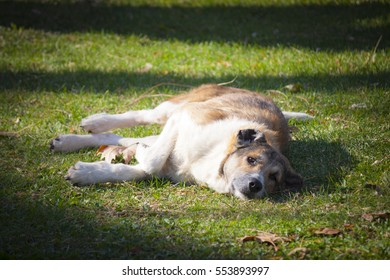 Stray dog resting on the grass