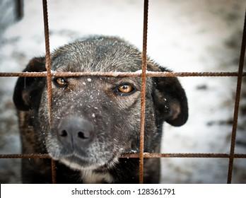 Stray dog in shelter