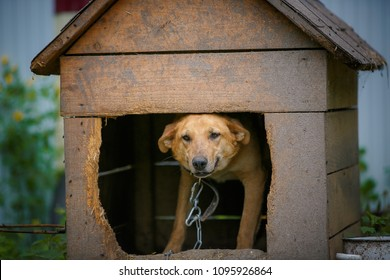 A stray dog sits on a chain in a shelter. The concept of homeless animals. Animal shelter. Vaccination against rabies.