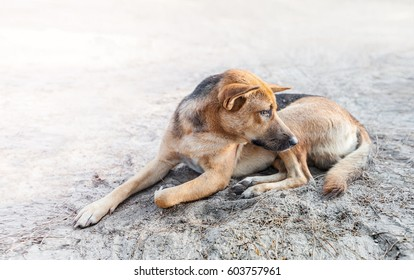 stray dog sleep on the sidewalk, look as if hungry and sad dog