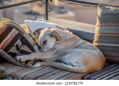 Stray dog sleeping at the corner of the terrace with pillows