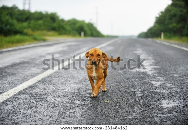 A stray dog standing on an empty road