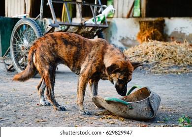 stray dog, street dog