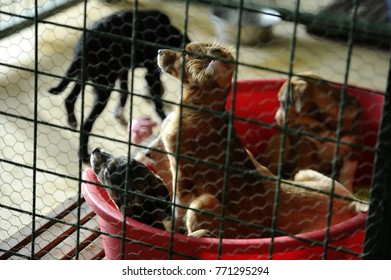Stray dogs behind the bars in dogs shelter