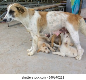 Stray dogs are to breastfeed