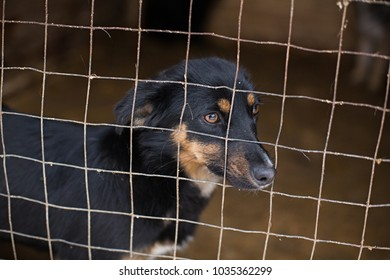 Stray dogs in a cage