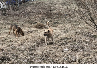 stray dogs looking for food in the park. homeless animals concept