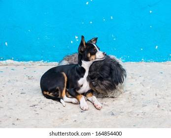 Stray Dogs on the Streets of Tijuana, Mexico