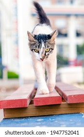 The stray or feral cat on the sidewalk. Feral cats often live outdoors in colonies in locations where they can access food and shelter.