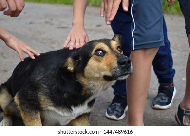 Stray hungry dog. Children iron the stray scared dog on the street. Children's hands and head of a dog close up. Summer children's vacation