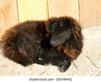 Stray injured dog in sunlight