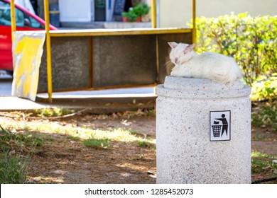 Stray injured and sick white long-haired tomcat lying on a concrete street trash can in the Bulgarian village of Krepost, Haskovo Province