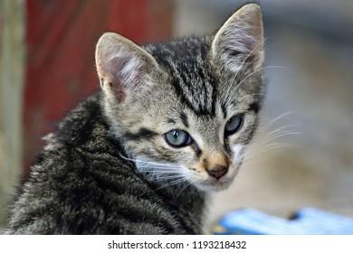 A stray kitten looking towards the camera