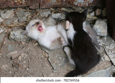 stray kittens in abandoned building