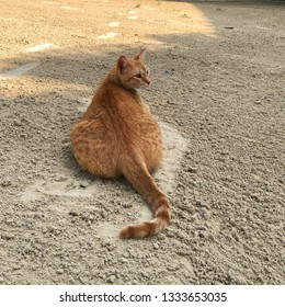 Stray orange tubby cat laying in the sand