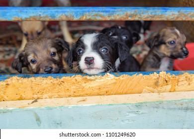 Stray puppies in a cage. Dog shelter. The animal is behind bars. Homeless puppies. Animal cruelty