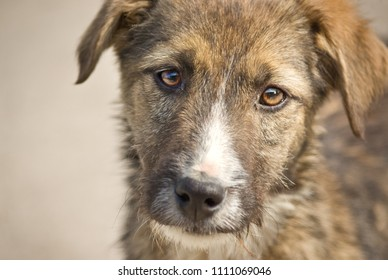 Stray puppy dog looking sad in a shelter