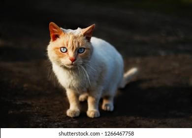 9d357e2ec1 Stray sad white cat on street looking at camera. Stray homeless cat wanders  on streets