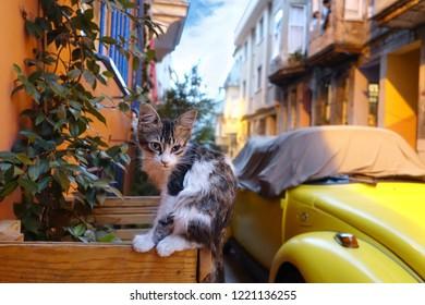 Stray Street Cat, Balat, Istanbul, Turkey