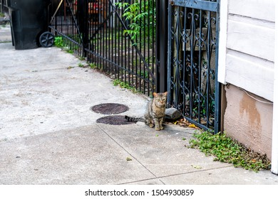 Stray tabby cat with green eyes sitting on sidewalk streets in French Quarter of New Orleans, Louisiana by metal fence