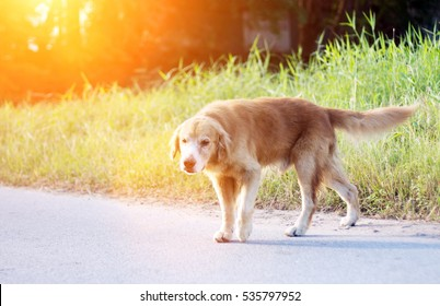 stray walking on park for area show scope power in the morning light