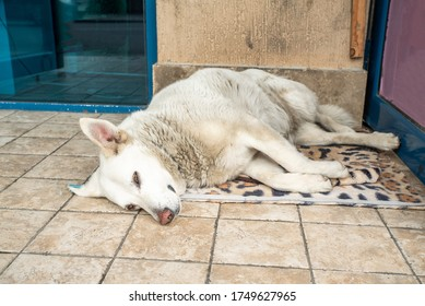 Weary Dog Images, Stock Photos & Vectors | Shutterstock