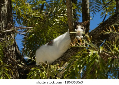 Stray white and grey cat ran up to a tree and waits there for the threat to go away. Looking at the camera.