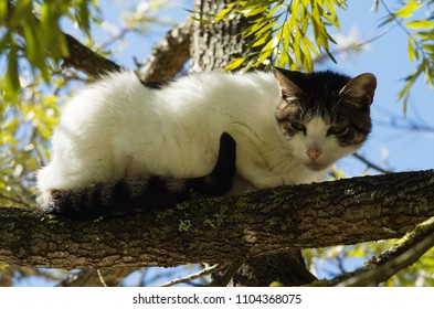 Stray white and grey cat ran up a tree and waits on a branch for the threat to go away. Looking suspicious.