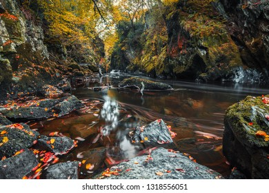 Streaks of floating autumnal leaves on the surface of murky water of Fairy Glen Gorge Waterfall in North Wales, UK