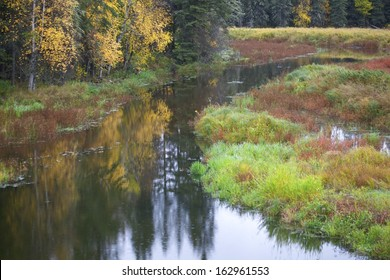 Stream in an Autumn Forest