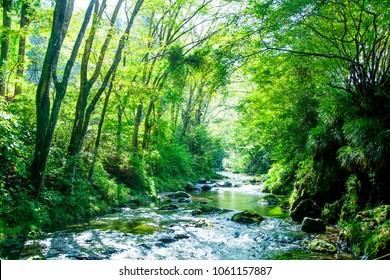 Stream below the trees
