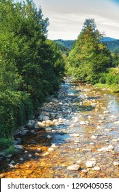 Stream in the Black Forest.
