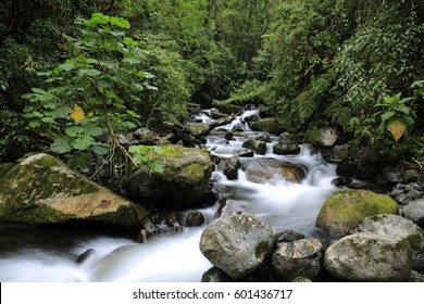 Stream in the Cloud Forest. Cerro Punta, Boquete, Panama