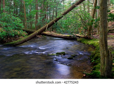 Stream deep in the forest